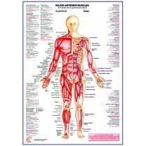Posters & Charts
